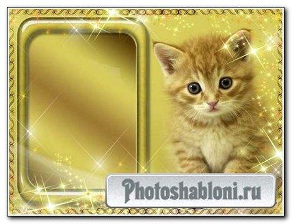 Рамка для фото – Рыжий котенок