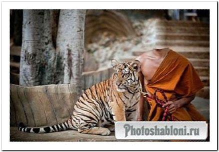 Шаблон для фотошопа - Красивый тигр