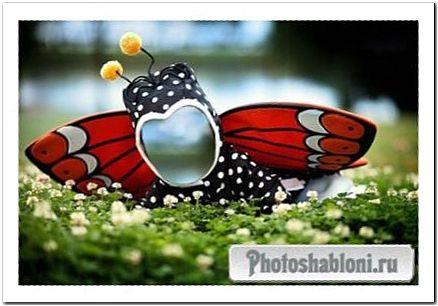 Шаблон для фото - Крохотная бабочка