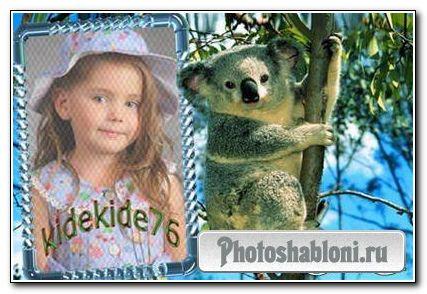 Рамка для фотошопа - Мишка коала