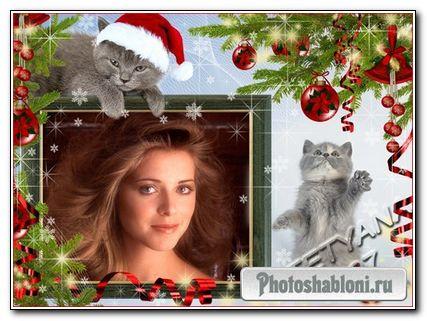Рамочка для фотошоп - Новогодние котята