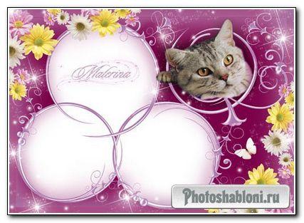 Рамка для фотошоп - Серый котик