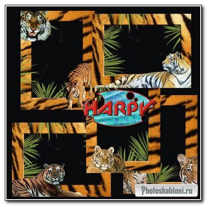 Тигриные рамки